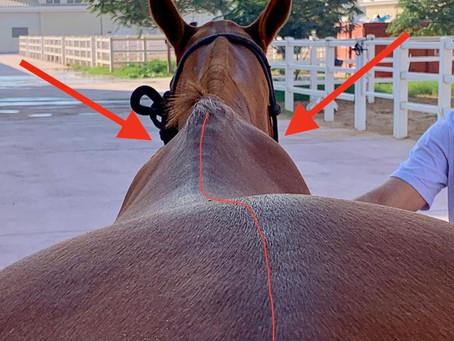 Asymmetric shoulders need asymmetric saddles