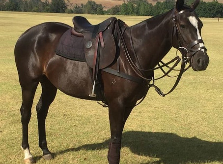The cost of cheap polo saddles is higher than you may think!