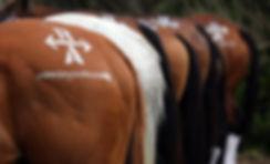 AP horses.JPG