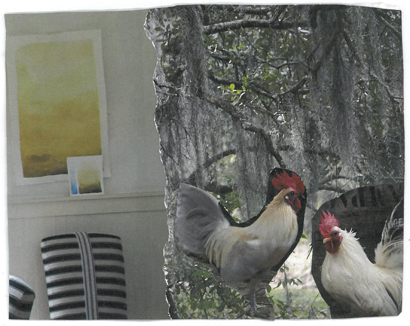 rooster friends