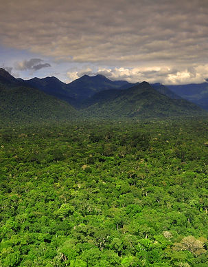 Terra Yanomami_NivoSlider.jpg