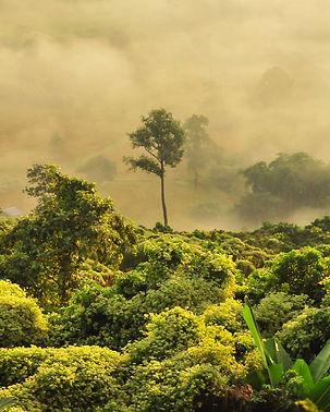Rainforest_boudewijn-huysmans.jpg