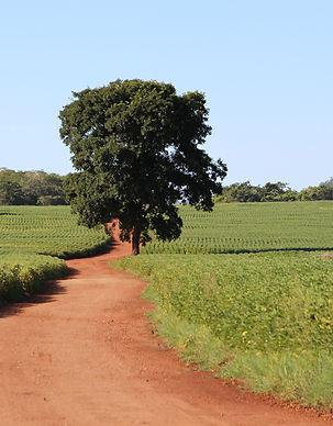 agribusiness-soy Brazil.jpg
