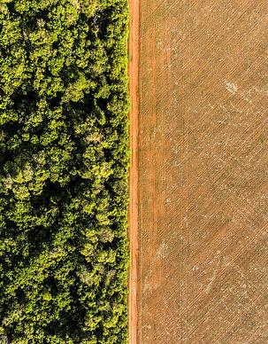 Desmatamento Soja Amazonia - Acervo ISA.