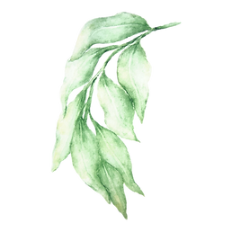 Leaves%25203_edited_edited.png