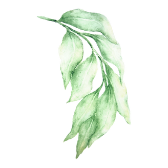 Leaves%203_edited.png