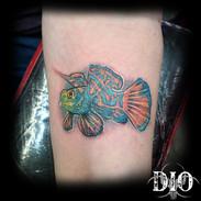 colorful tropical fish.jpg
