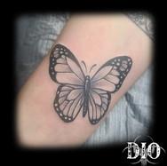 black & gray butterfly.jpg
