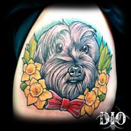 yorkie dog portrait.jpg