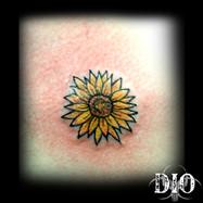 tiny-sunflower.jpg