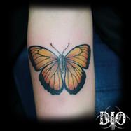 yellow butterfly on forearm.jpg