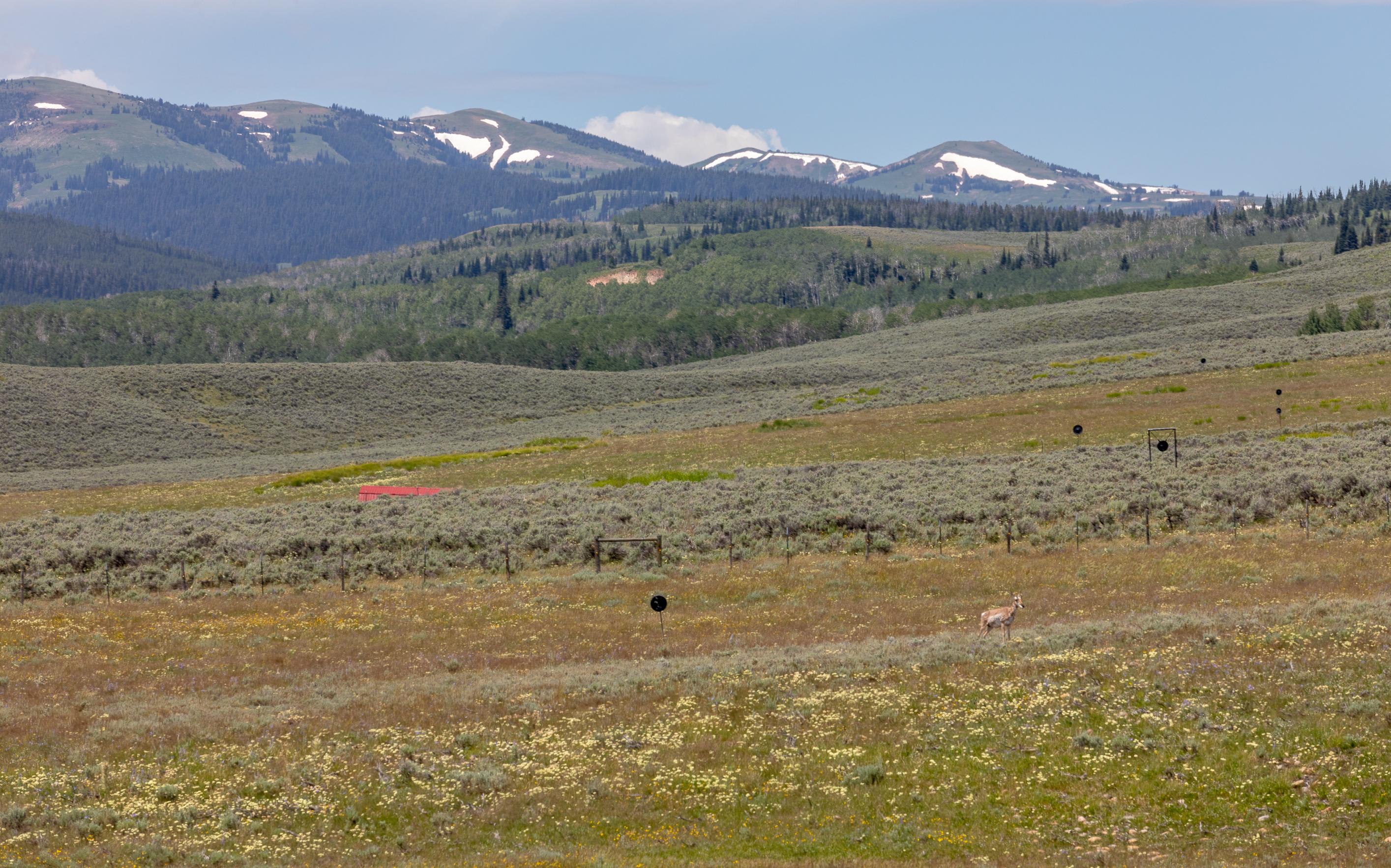 Little Daniel Ranch Daniel Wyoming_-71