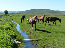 Summer horses and ditch