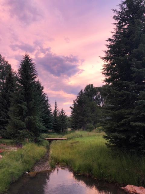 Stream, trees
