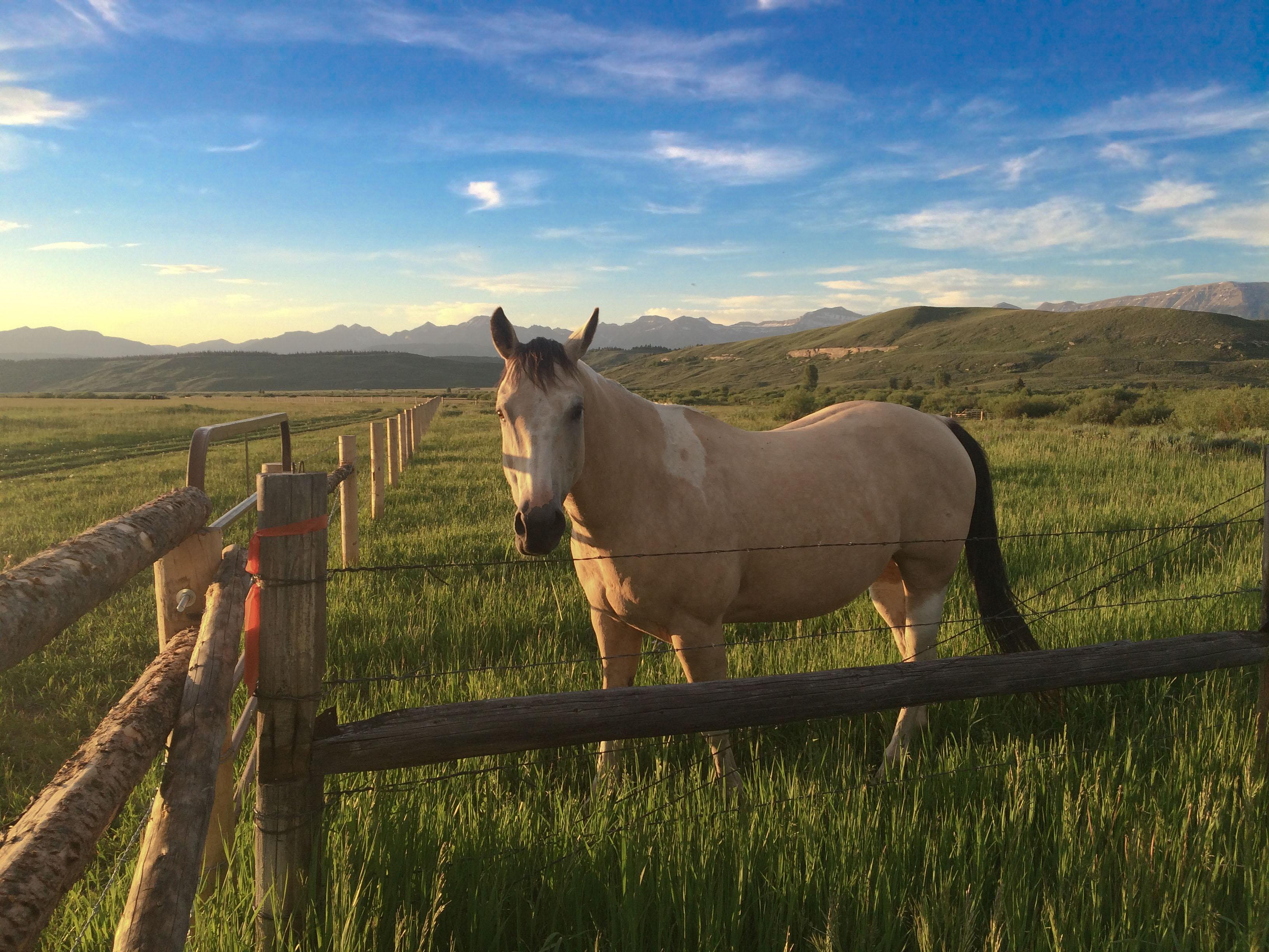 Horses, Fishing, 20 Acres