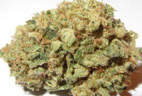 blueberry-marijuana-strain-3.jpg