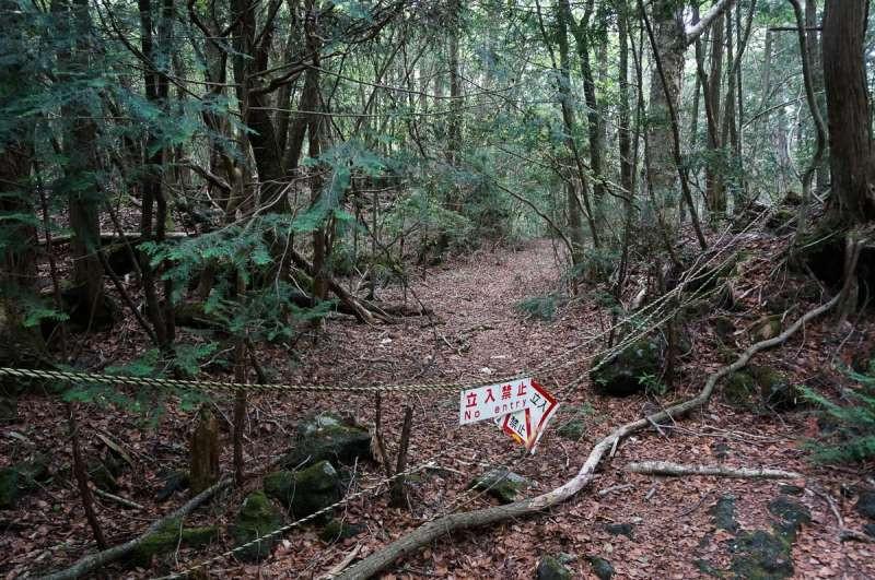 "La ""Selva Oscura"" giapponese"