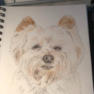 Fur Angel finished sketch