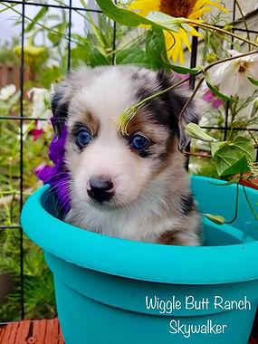 Past Puppies 7