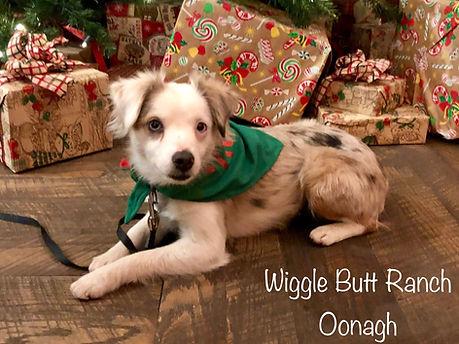 Oonagh Image 1