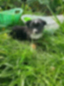 Past Puppies 3