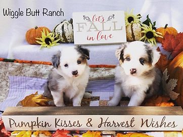 Past Puppies 1