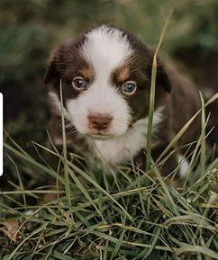 Past Puppies 6