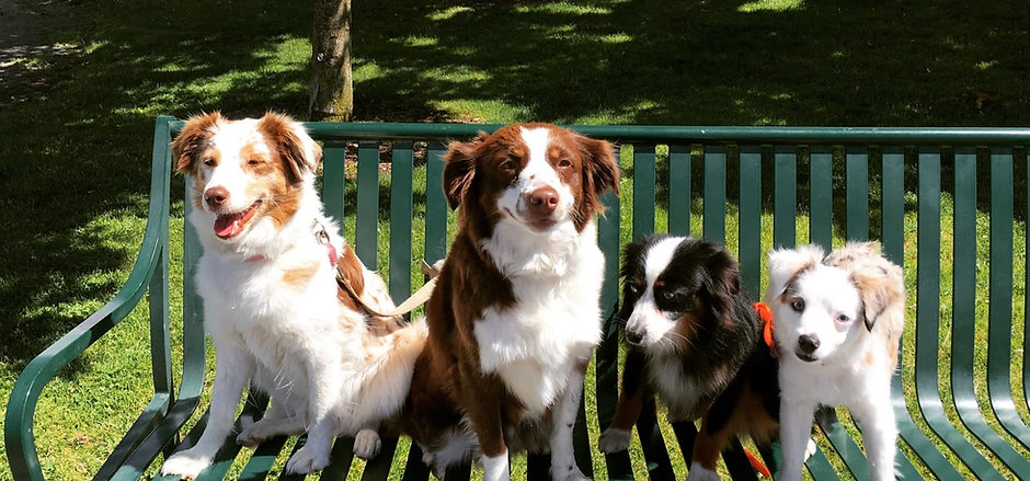 Princess Leia, Rosie, Beau, Oonagh