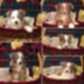 Past Puppies 5
