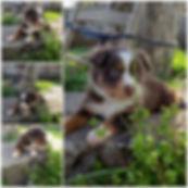 Past Puppies 2