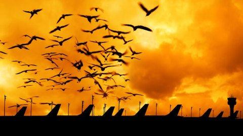 avian abatement.jpg