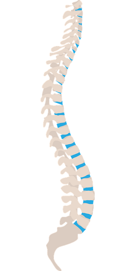 spine-1925870_960_720.png