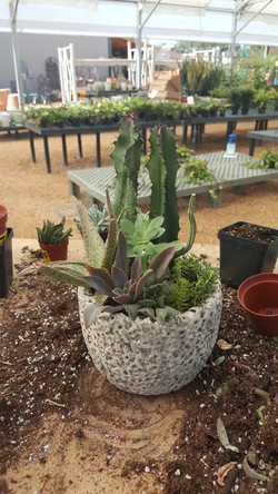 Custom succulent container
