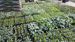 Vegetable Shipment