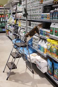 Calla inspecting