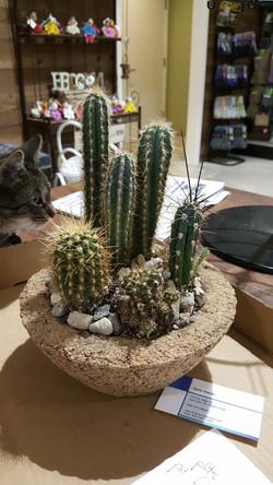 Custom cactus container