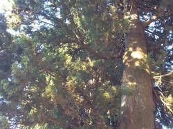 alberi e frescura