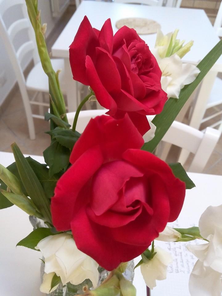 rose fresche