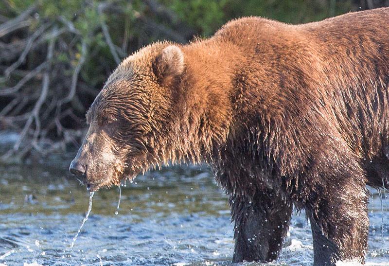 8-27-bear-rough4-(1-of-1).jpg