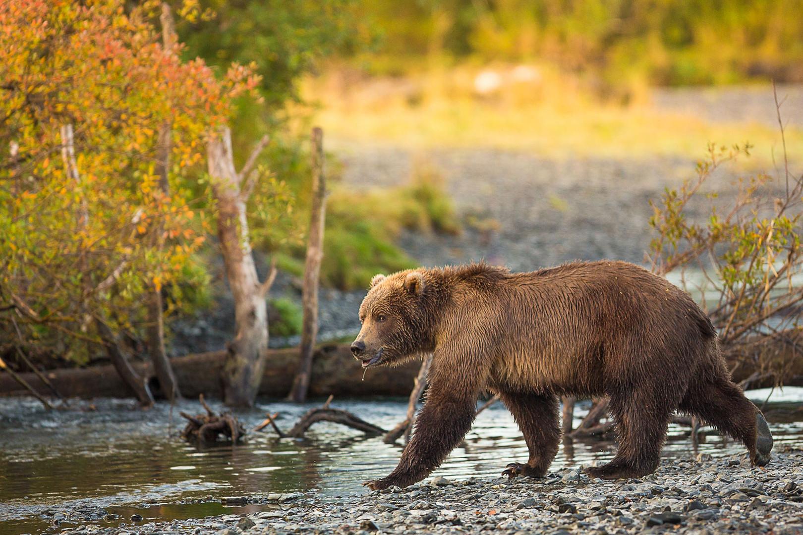 bear-2--9-20-(1-of-1).jpg