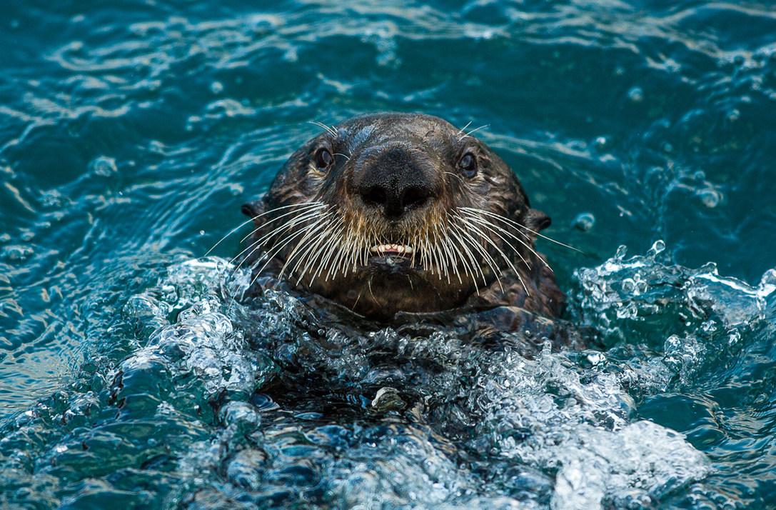 otter-looking-fb-(1-of-1).jpg