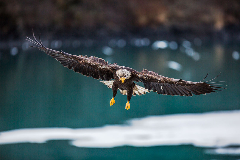 eagle-in-channel-fb-(1-of-1).jpg