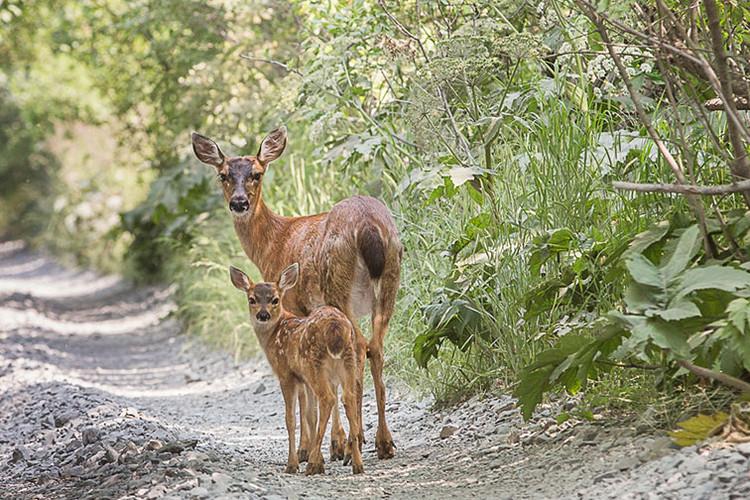7-7-19-deer2-(1-of-1).jpg