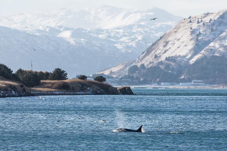 orca-3-fb-(1-of-1).jpg
