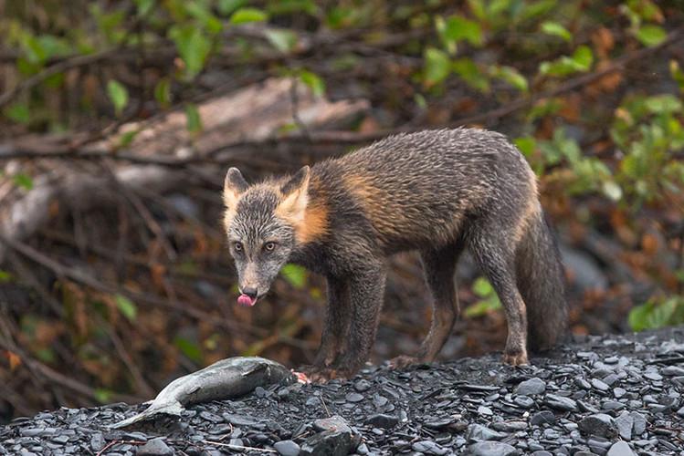 9-17-fox4-(1-of-1).jpg