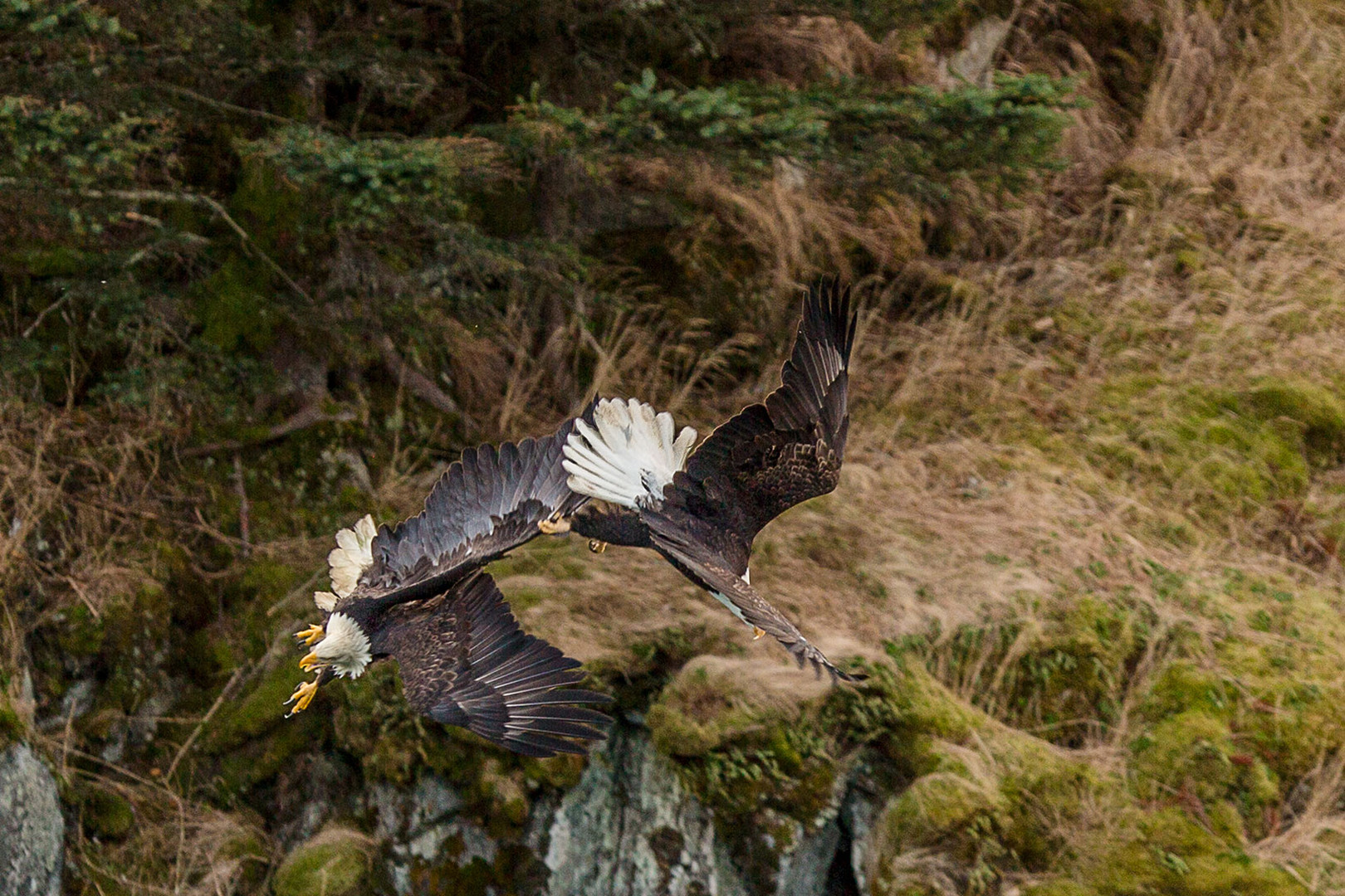 eagle-fight-midair-fb-(1-of-1).jpg