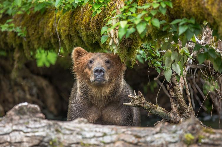 7-23-bear-2-no-watermark-(1-of-1).jpg