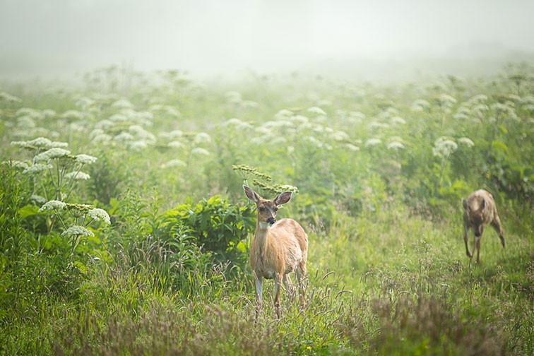 7-7-19-deer-(1-of-1).jpg
