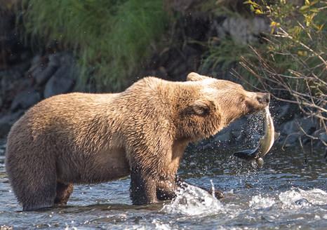 8-27-bear-rough2-(1-of-1).jpg