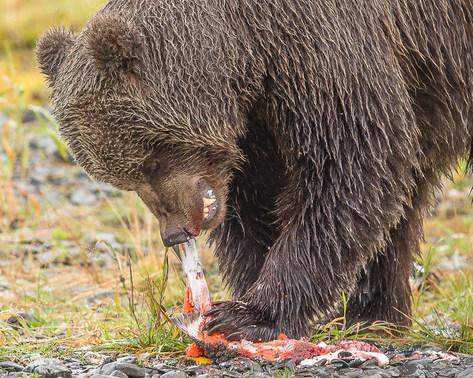bear3-9-29-(1-of-1).jpg